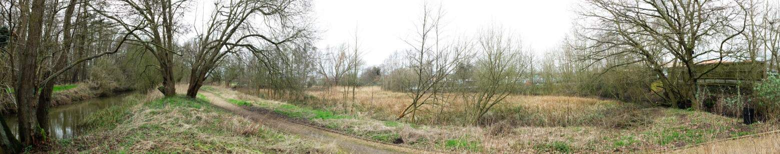 Wetland area behind Morrisons / Tesco Diss