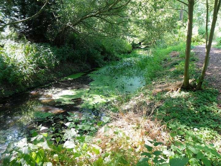 Frenze Beck riverbank