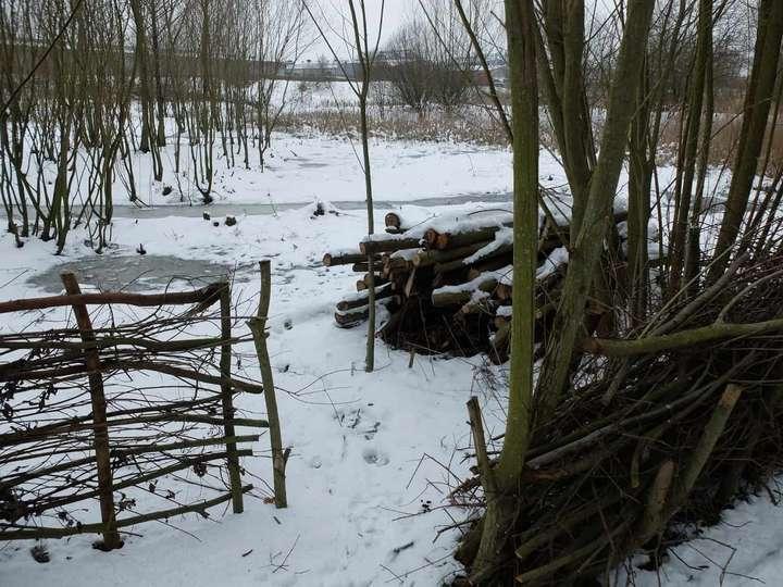 Winter view over wetland